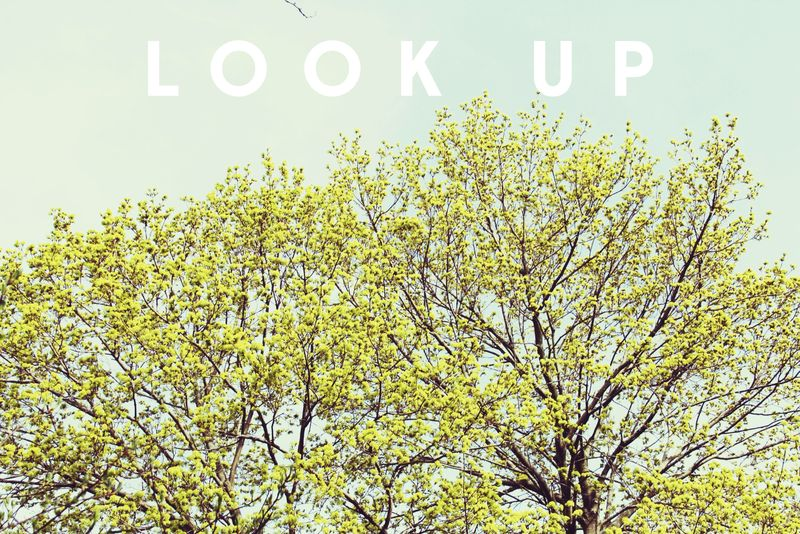 Look Up Photo